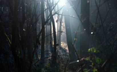 Forêt silence