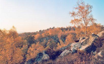 Foret_Fontainebleau_automne